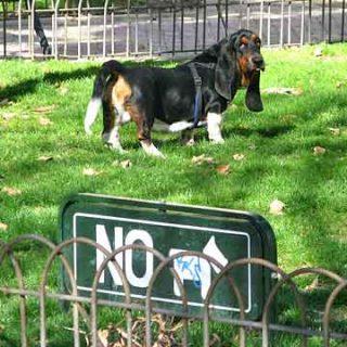 Los parque para #perros, aunque todavía insuficientes, aportan muchas ventajas.