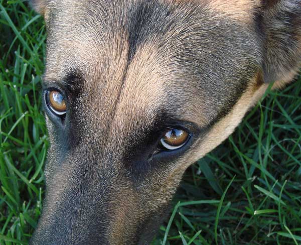 Perro estresado Vs perro feliz. ¿Sabemos interpretar a los perros? (C/vídeo).