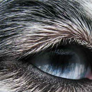 Los perros SÍ ven en color, aunque no como nosotros.