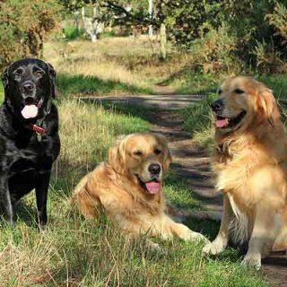 """Los alimentos naturales para perros """"están de moda"""", pero ¿realmente son mejores para los perros?"""