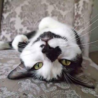 8 señales de que tu gato es en realidad... ¿un perro?