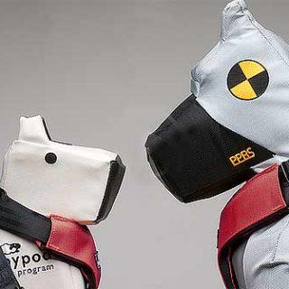 Cinturón de seguridad para perros, nuevo modelo se acaba de presentar en Superzoo 2013.