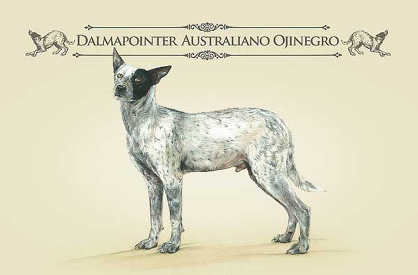 ¿Conoces perros como el Dalmapointer australiano ojinegro, o un alaskan collie pelucherrier?