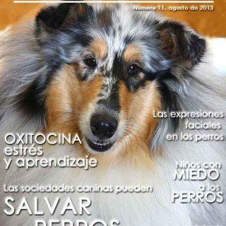 Revista doogweb nº 11, descárgala gratis.