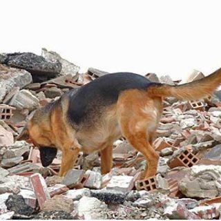 Clausura de las primeras Jornadas de Rescate Canino en Catástrofes Método Arcón que ha organizado el Ayto. de Cox, Alicante.