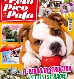 Pelo Pico Pata, agosto 2013: Perros destructores, los beneficios del agility, cómo debe ser un buen paseo, peligros del agua para los perros...