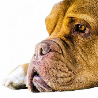 #Veterinaria. La piómetra en las perras... 10 preguntas con respuesta.