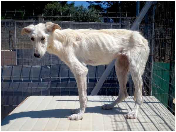 Un tipo de collares ha resultado cien por cien efectivo para prevenir la Leishmania en perros jóvenes.