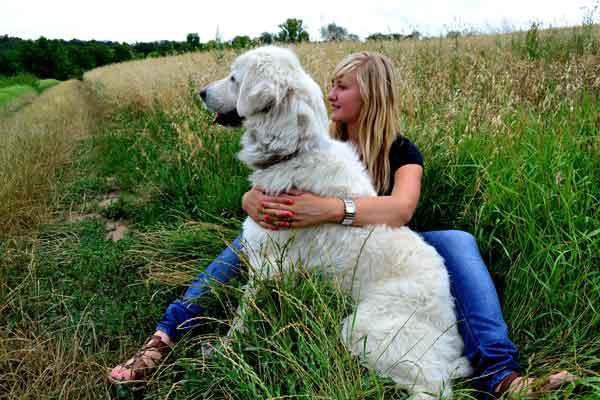 ¿Cómo acariciar a un perro de forma segura? Ojo... no a todos los perros les gusta que les acaricien.