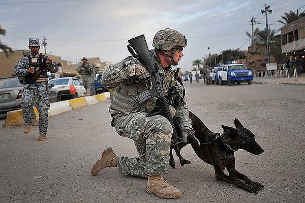 """¿Y si hubiera """"otra forma"""" de adiestrar a los #perros detectores de explosivos?"""