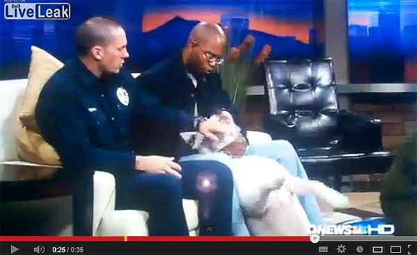 Cómo conseguir sacar de quicio a un #perro tranquilo hasta desencadenar el mordisco (vídeo).