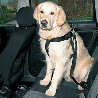 Subaru colabora en el desarrollo de un arnés de viaje para perros más seguro (vídeo).