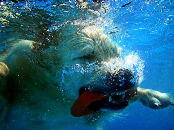 Fotos acuáticas con los #perros, así puedes hacerlas.