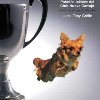 La VII Copa de Agility UCA se celebrará los próximos 2 y 3 de noviembre en el pabellón cubierto del Club Nueva Cartuja, en Valdetorres del Jarama, Madrid.