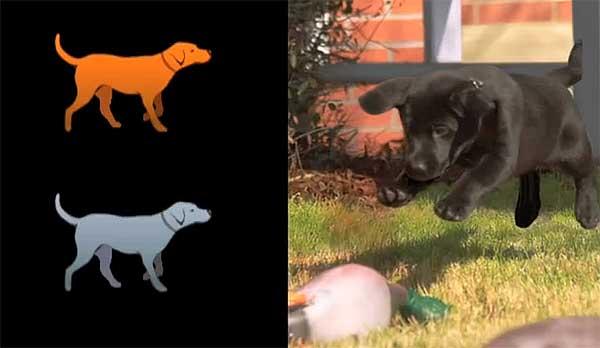 Control remoto para #perros, más cerca que nunca. Y va en serio, pero no es lo que parece...