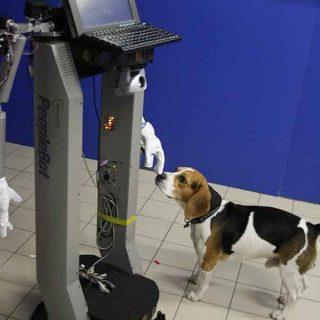 El perro es (también) el mejor amigo del robot (c/vídeo).
