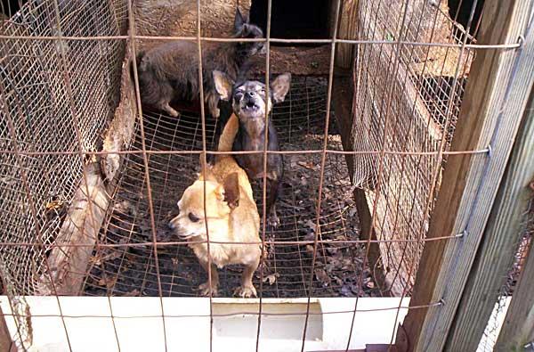 Departamento de Agricultura de EE.UU. establece nuevas medidas para luchar contra las granjas de cachorros.