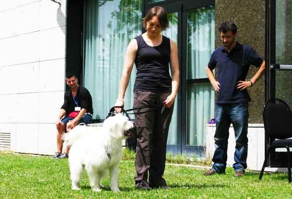 BAT, 8 preguntas con respuesta (técnica creada por Grisha Stewart para mejorar la vida y rehabilitar a perros reactivos, miedosos o frustrados).