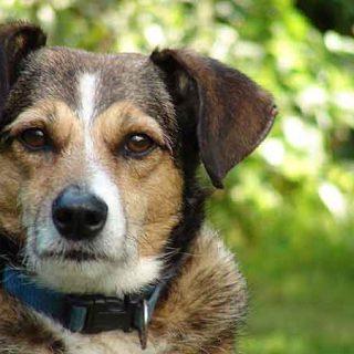 Modificación del delito de maltrato animal en el Código Penal, un paso adelante, pero insuficiente.