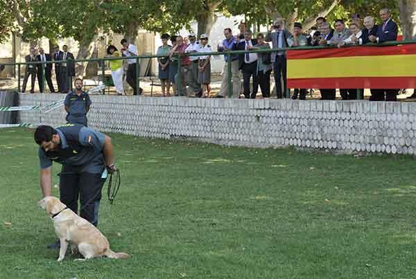 Estudio clínico para detectar la narcolepsia mediante el olfato de perros adiestrados del Servicio Cinológico de la Guardia Civil.