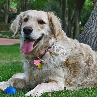 ¿Por qué come hierba mi #perro? Hay tres causas principales.