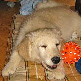 #Perros solos en casa... ¿Saben cuanto tiempo pasa? ¿Pueden diferenciar entre una hora y cinco horas?