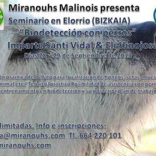 Miranouhs Malinois y Más que Guau organizan el seminario Biodetección con perros (setas, trufas, cualquier especie animal...). 28 y 29 de septiembre en Elorrio.