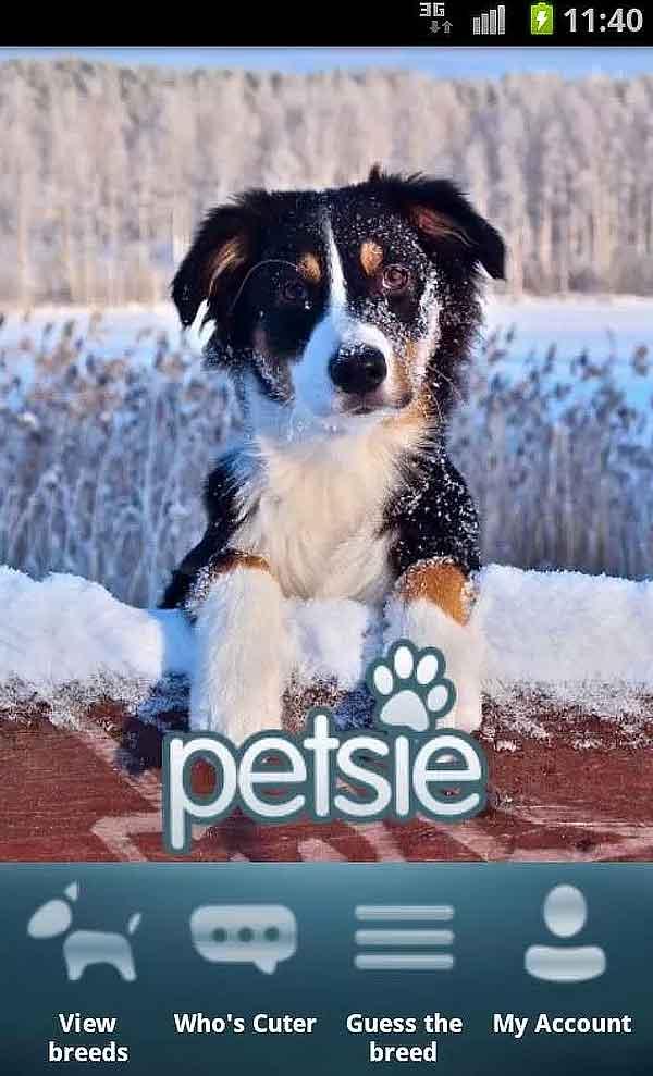¿Cuánto sabes de razas de perros? Petsie dog breeds, app gratis para conocer todas las razas.
