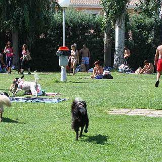 Salpican, pis. piscina para perros por un día, en imágenes. Así ha sido.