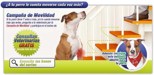 Fin de Campaña contra la Artrosis Canina de Zoetis. Listado de ganadores del concurso consultas veterinarias gratis.
