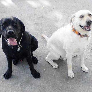 Proyecto pionero de perros de terapia y niños con síndrome de Asperger, en Gandía.