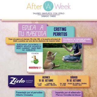 Taller de educación canina en Zielo. Tu cachorro puede ser uno de los elegidos.