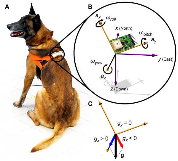 """Rastreador de comportamiento canino, el primer paso hacia los etogramas """"automáticos""""."""