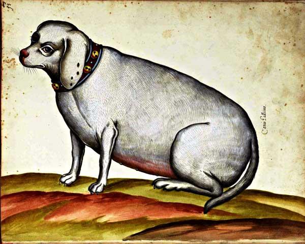 Los #perros obesos viven menos, y hay razas más delicadas que otras.