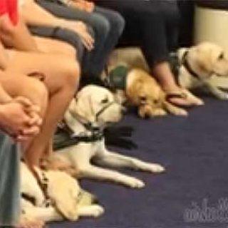 Simulador de vuelo para #perros: Perros que viajan en el avión, ¡pero con los pasajeros!