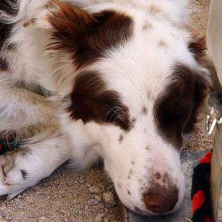 """3.600 #perros afectados, 580 de ellos muertos (EE.UU.) por """"premios"""" en mal estado procedentes de China."""