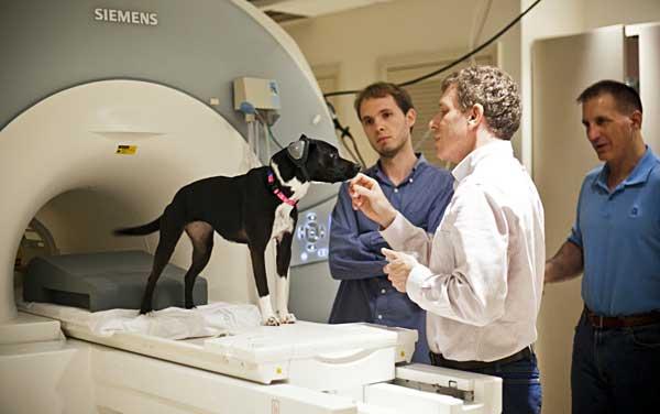 Los perros tienen emociones, como las humanas. Y lo demuestra la resonancia magnética.