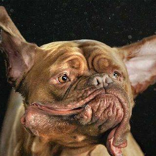 Shake, perros congelados por la fotógrafa Carli Davidson (con vídeo).