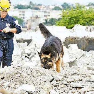 """Tres perros entrenados encontraron una persona atrapada bajo una montaña de escombros, durante un simulacro realizado por una brigada de """"Bomberos Unidos sin Fronteras (BUSF), al concluir un programa de entrenamiento"""