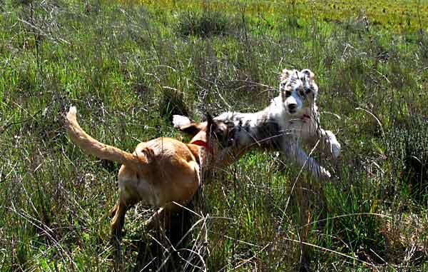 #Perros, ejercicio, sobreexcitación y estrés. ¿Volvemos al origen?