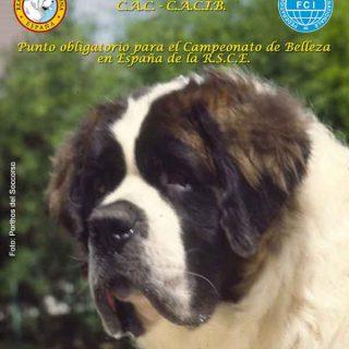 Exposición Canina Internacional de Talavera 2013, próximo fin de semana. Horarios, cómo llegar...