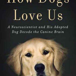 Sí, los perros tienen emociones como las humanas: El esperado libro del experimento de Gregoy Berns con su perro Callie en la Universidad de Emory lo demuestra.
