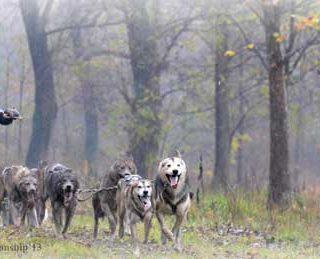 El musher de La Cerdaña, Lázaro Martínez, ha hecho historia en el mushing catalán tras proclamarse Campeón del Mundo en la categoría de 8 perros nórdicos, en los mundiales de la especialidad disputados del 8 al 10 de noviembre a la localidad italiana de Falze' di Piave.