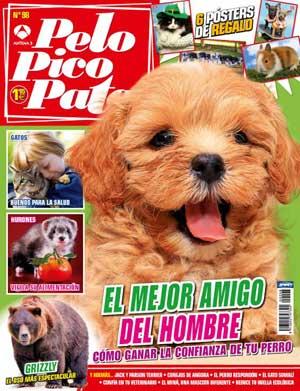 Revista Pelo Pico Pata de diciembre: Perrotón 2013, como razas especiales Jack Russell Terrier Vs Parson Russell Terrier, la confianza entre amos y perros, televisión para perros, 3 cosas que no hacer con un cachorro.