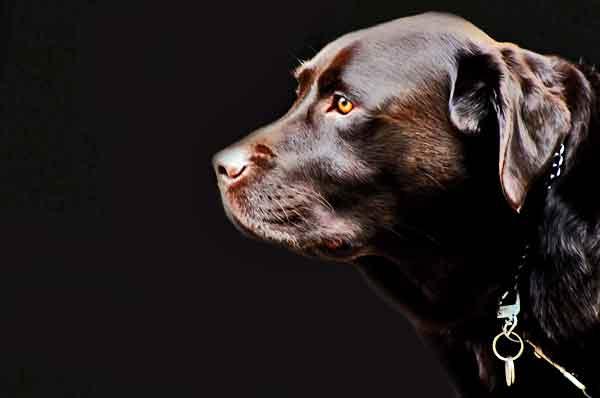 10 razones por las que tu perro no te hace caso (y cómo identificarlas).