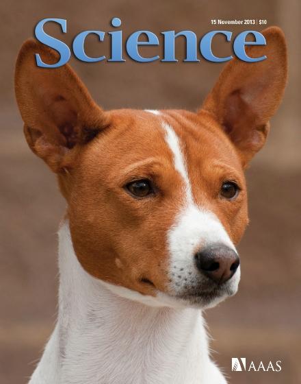 Según la UCLA, los primeros #perros provienen de Europa, y tienen una antigüedad de al menos 18.000 años.