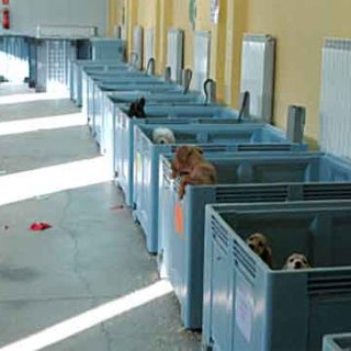 La Guardia Civil interviene 146 cachorros de perros que habrían sido introducidos en hogares del país de forma irregular estas navidades.