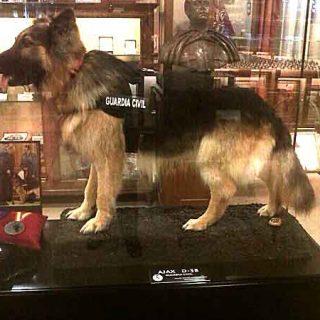 Ajax, perro de la Guardia Civil disecado.