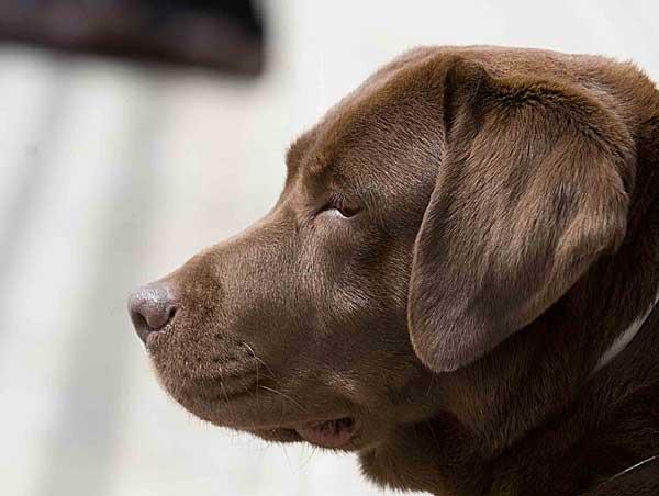 ¿Es posible el aprendizaje libre de errores? 1. Hay que aportar mucha información al perro. 2. Y hay que preparar el entorno.
