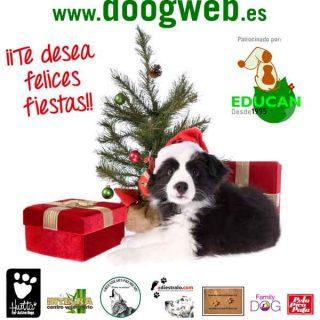 Desde doogweb te deseamos una ¡feliz Navidad! (¡Y no dejes que Papá Noel se olvide de los peludos!).